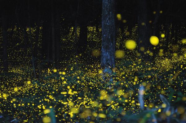 Slow-Shutter-Fireflies-5